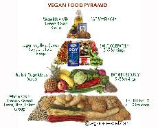 A vegetarian diet is as healthy as a diet containing meat essay